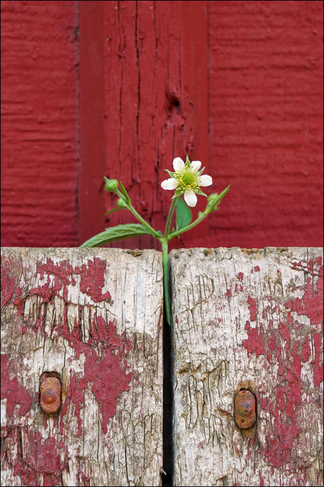 farm barn flower